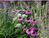 Aster big data #plant #nursery,garden #plants,gardens #yorkshire,herbaceous #perennial #plants,specialist #plant #nursery, #sneeboer #gardening #tools, #alex #kilner #trugs, #nutscene #twine,perennial #garden #yorkshire,sneeboer,jakoti,muckers #mulch,veggie #soil,yorkshire #flowerpots,york #handmade #flowerpots,floreo #gardening #gloves,gisela #graham,house #doctor,vintage #gardening #tools,vintage #flowerpots,fallen #fruits #planters,bakewell #soap,howden #soap,ryland #and #peters #note…