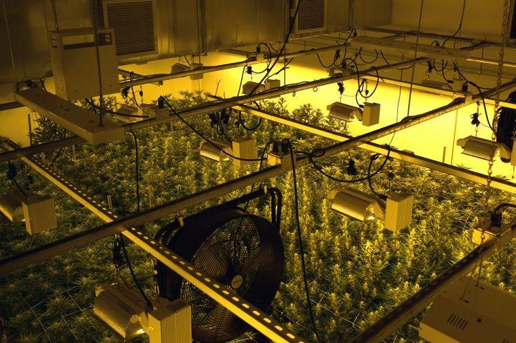 The wrong kind of buzz: Marijuana grow lights vex ham radio operators