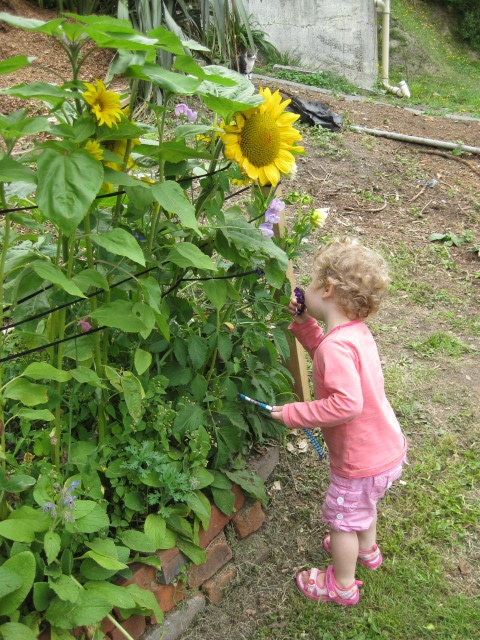 Sunflowers, sweet peas and borage - living playhouse a la Pump house