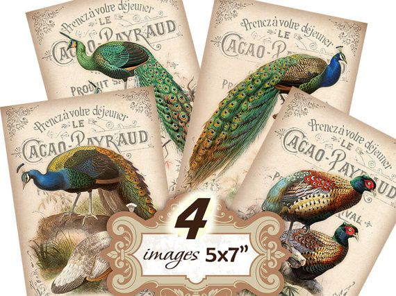 Vintage peacocks exotic birds 5x7 inch Greeting cards Shabby Paper Scrapbook decoupage (354) Buy 3 - get 1 free