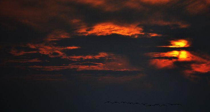 Nature: Inferno by irmavantoledo