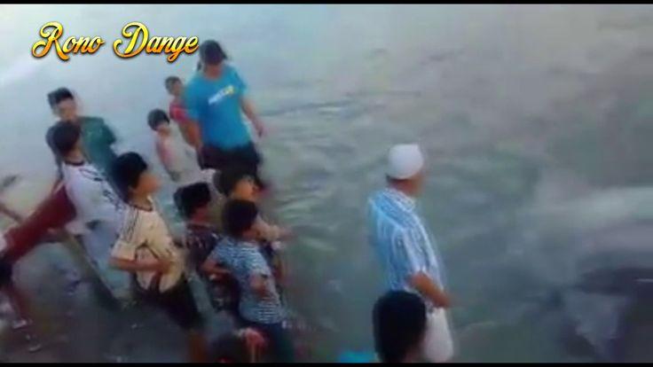 Hebooh... Ikan Mola Mola Terdampar di pantai Talise Palu