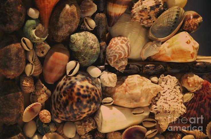 Memory Of The Sea Photograph  - Memory Of The Sea Fine Art Print