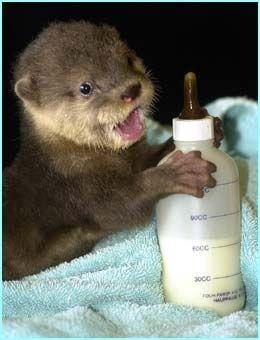 Animais fofos bebê bebendo de garrafas   – Beautiful Creatures