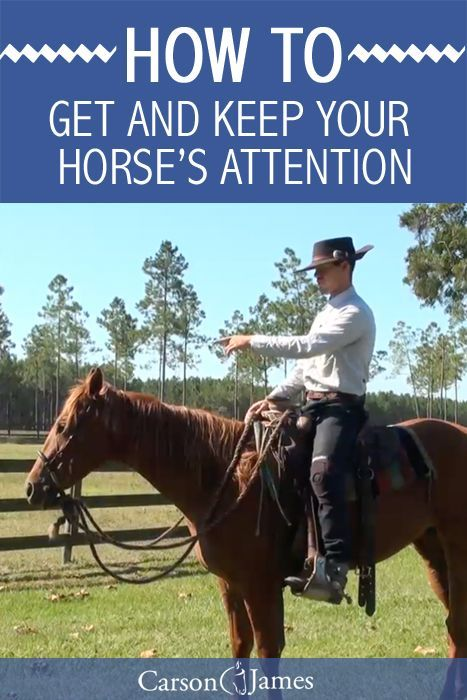 When training horses (or just simply riding horses) it's always important that you keep their attention and focus. In this horse training tip you'll learn how to get and keep your horse's attention. http://snip.ly/a09o7