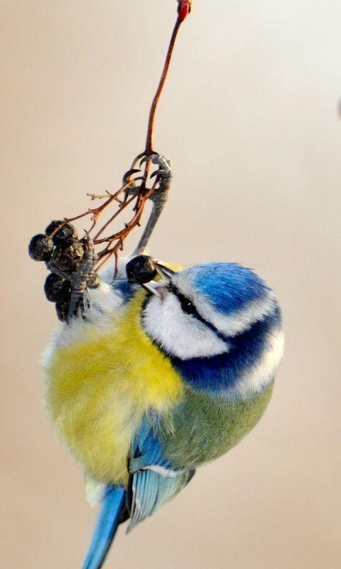 Vogeltjes in de tuin (ook vogelhuisje, -badje en voederhuisje)