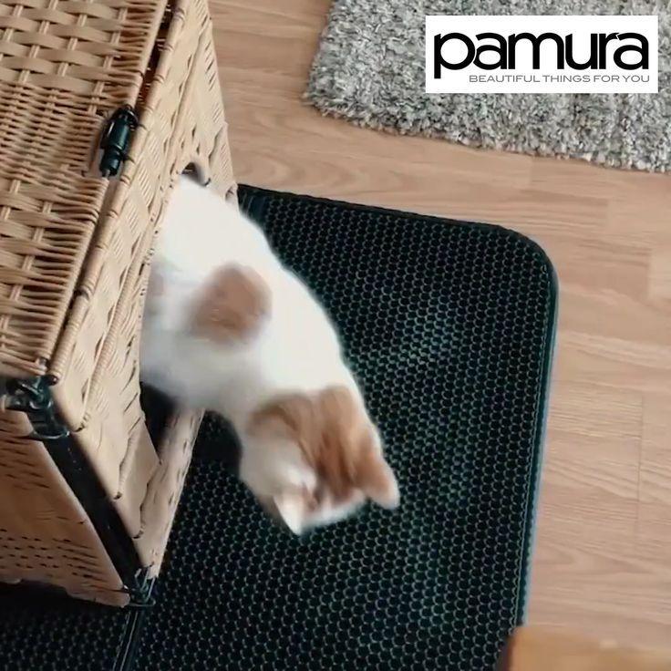 Katzenstreu In Der Wohnung Hier Die Geniale Losung Der Die Geniale Hier Katzenstreu Losung Socksdesign W Cat Litter Cats Cat Litter Mat