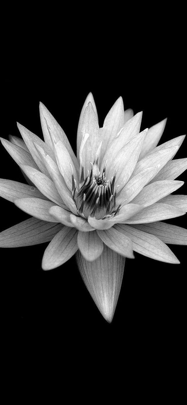 Dark Flower Black Background Iphone X Wallpaper Dark Flowers Flower Background Iphone Flower Iphone Wallpaper