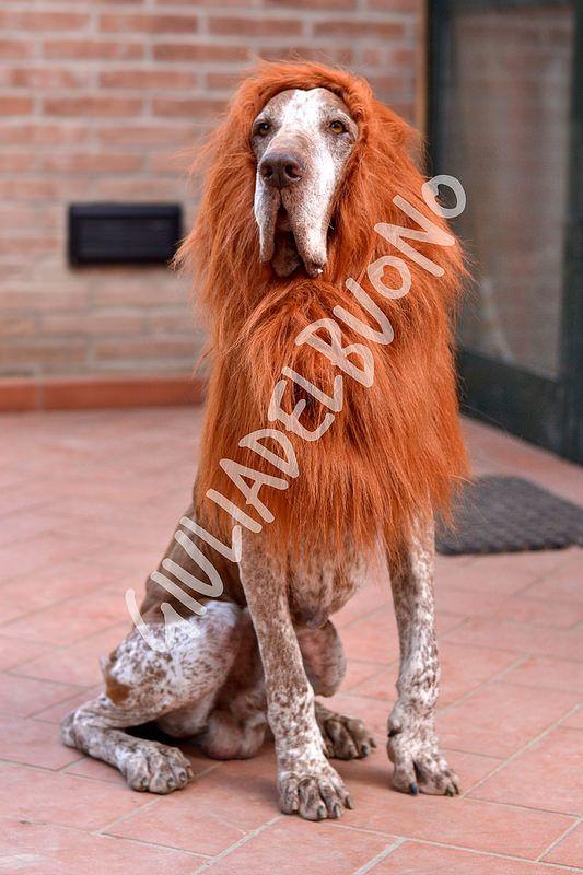 il leggendario leo-bracco