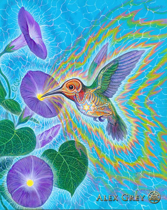 Hummingbird - Alex Grey