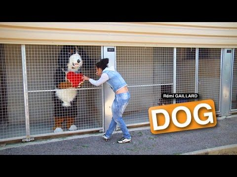 Funny Dog Prank From Remi Gaillard