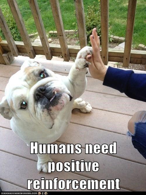 English Bulldog ~ Human Training