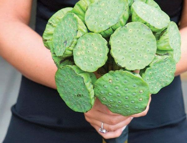 Green Lotus Pods All Year