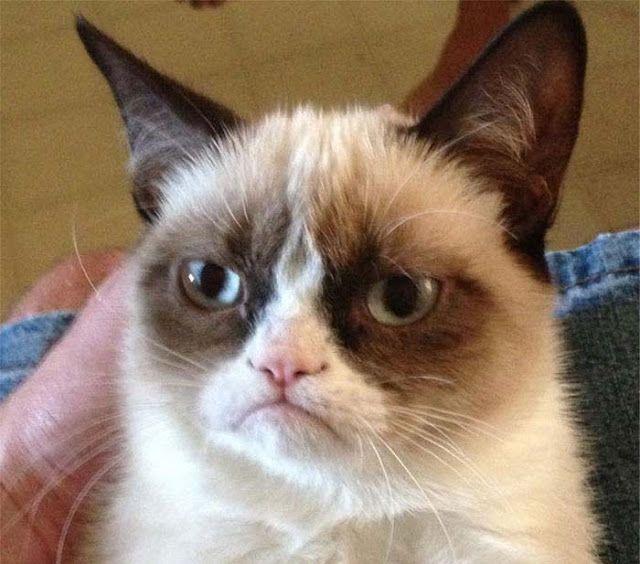 وفاة القطة الغاضبة الأشهر والأغنى قطة في العالم Grumpy Cat Humor Grumpy Cat Grumpy Cat Meme
