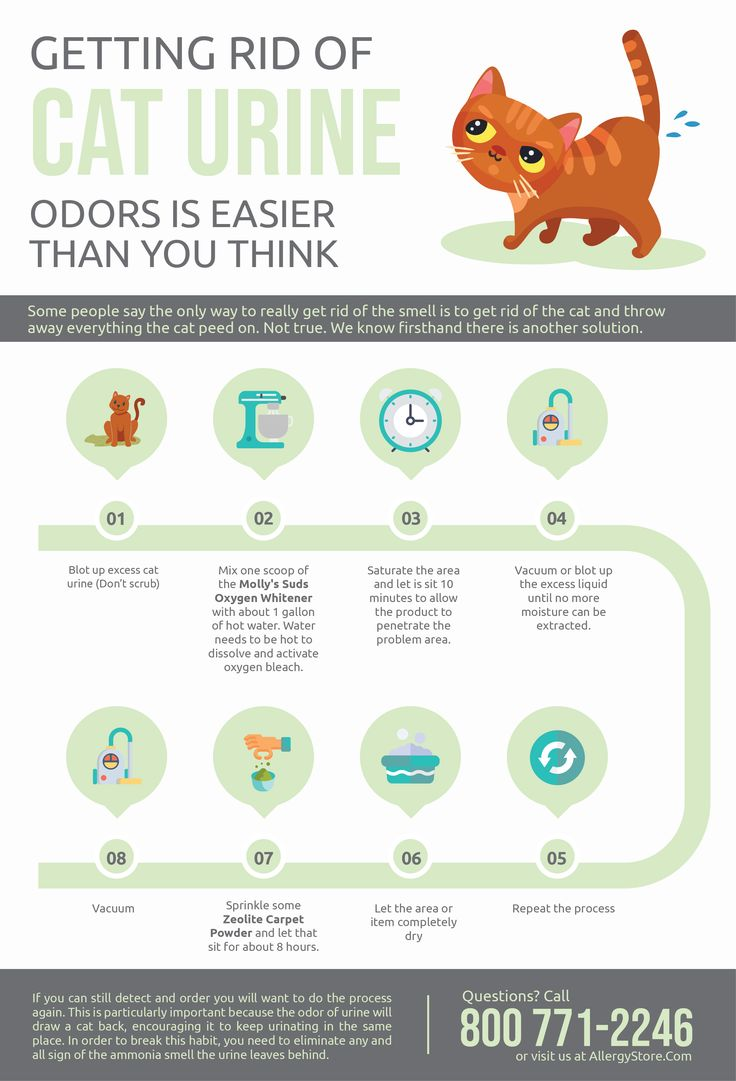 Getting rid of cat urine odors is easier than you think