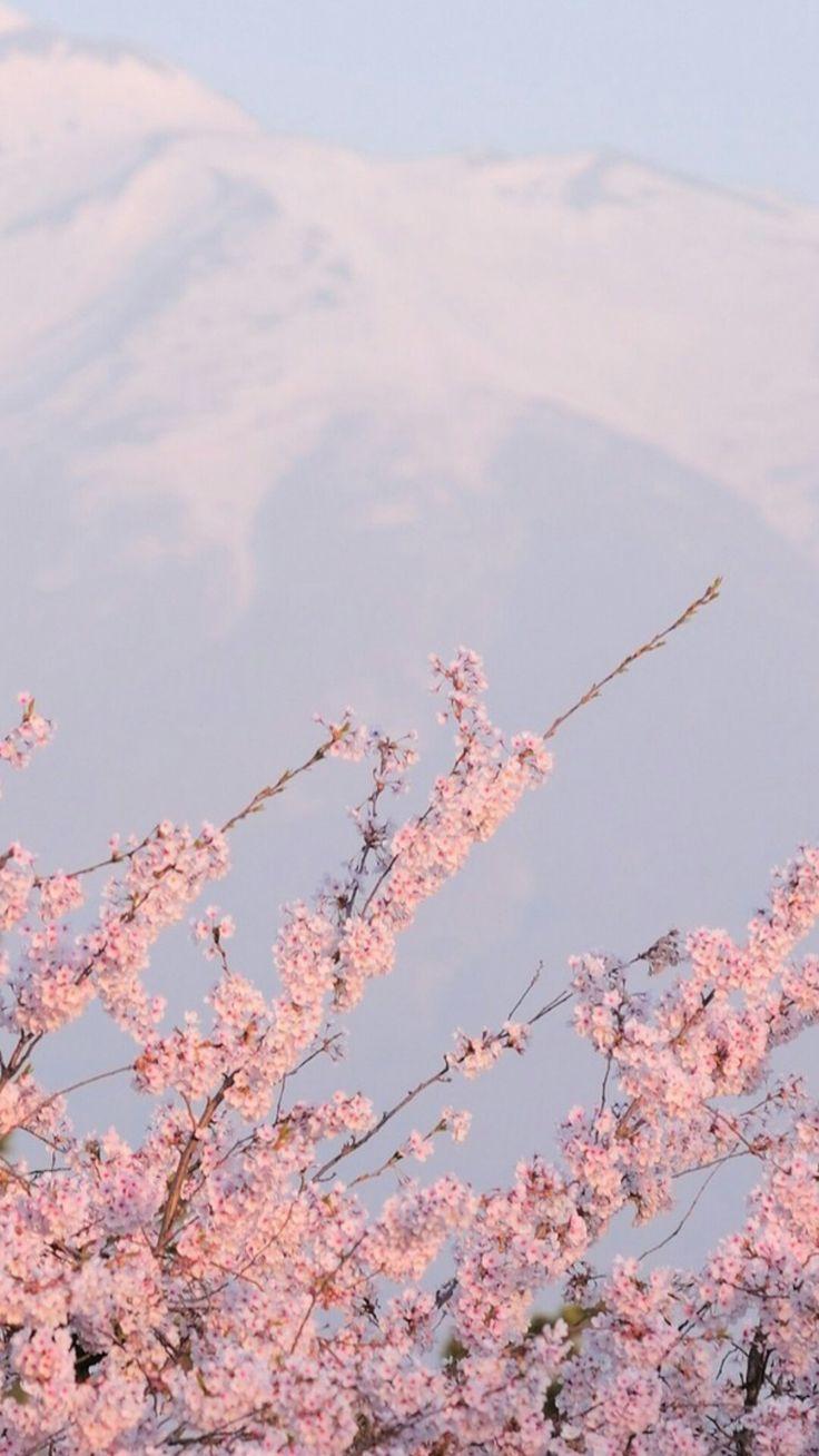 Sakura Wallpaper Tumblr Aesthetic Backgrounds Pastel Pink