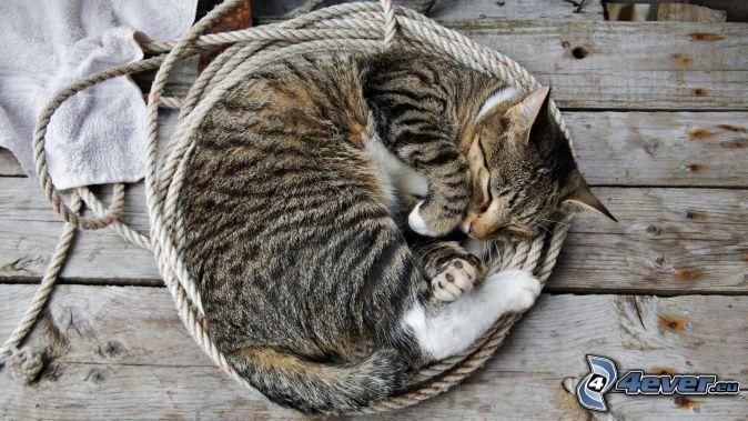gatto addormentato, corda (cambiare)