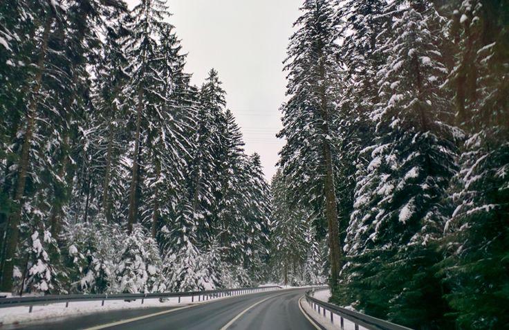 Floresta Negra: o cenário dos contos de fadas dos irmãos Grimm