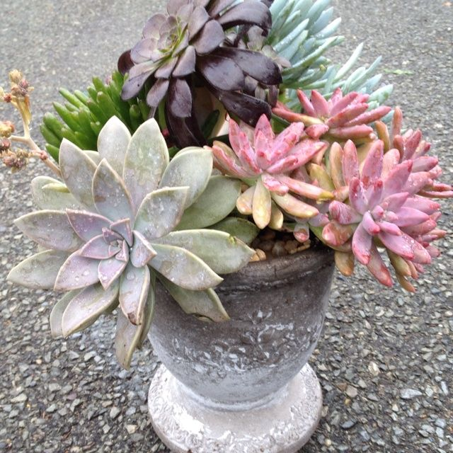 Succulent gardening a collection of ideas to try about for Succulent dish garden designs