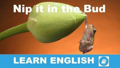 Nip it in the Bud - Angol kifejezés