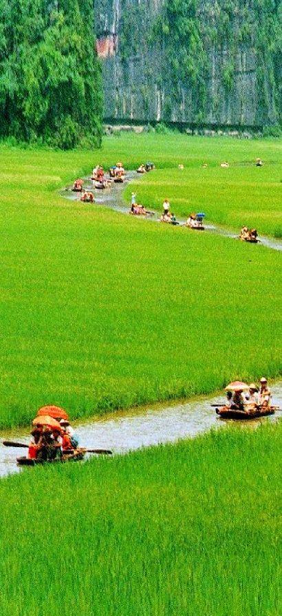 Una fila tranquilamente a través de los campos de arroz de Tam Binh Loc cerca de Ninh, Vietnam