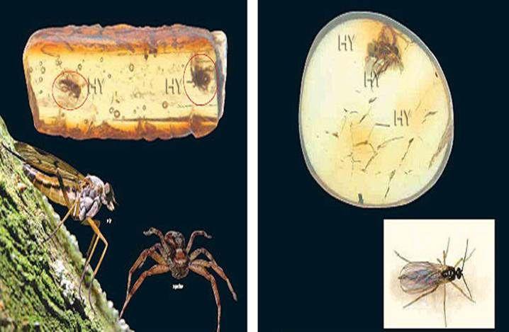 Sinek ve Örümcek http://dusuneninsanlaricin.com/evrimi-yikan-33-amber-fosili/