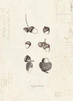 1000+ ideas about Acorn Tattoo on Pinterest | Oak Leaf Tattoos ...