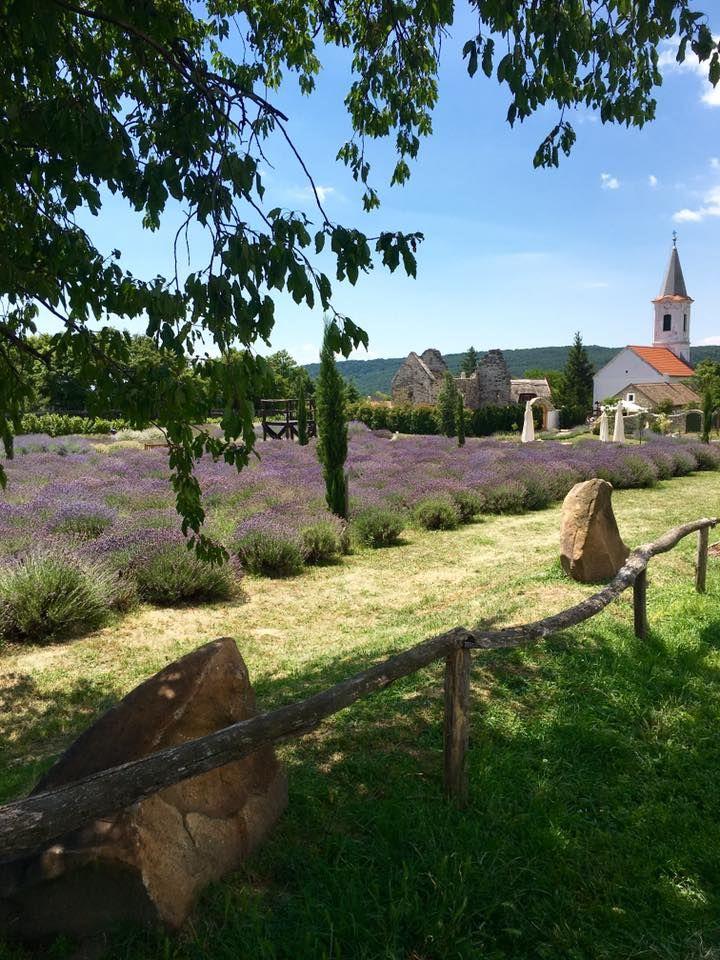 Lavender fields - Dorgicse, Hungary