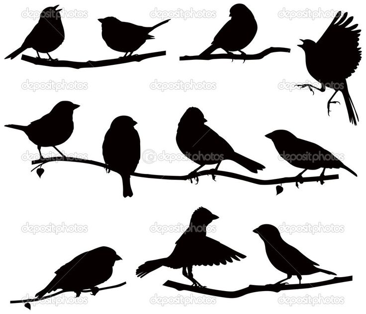 Silhouettes bird on a branch - Stock Illustration: 19233079