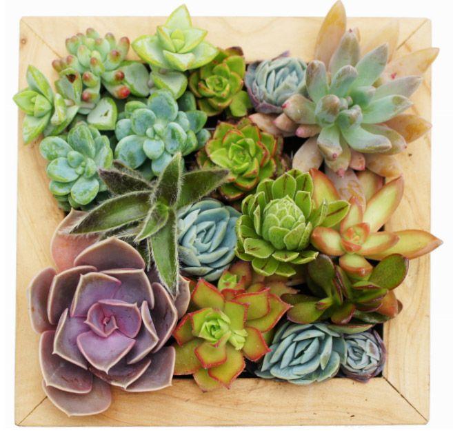 Les plantes grasses ont un mode de végétation particulier qui leur permet de résister et même de s'adapter à des...