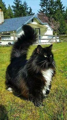 Для звёздного кота.  Для звёздного кота.Susannetreib