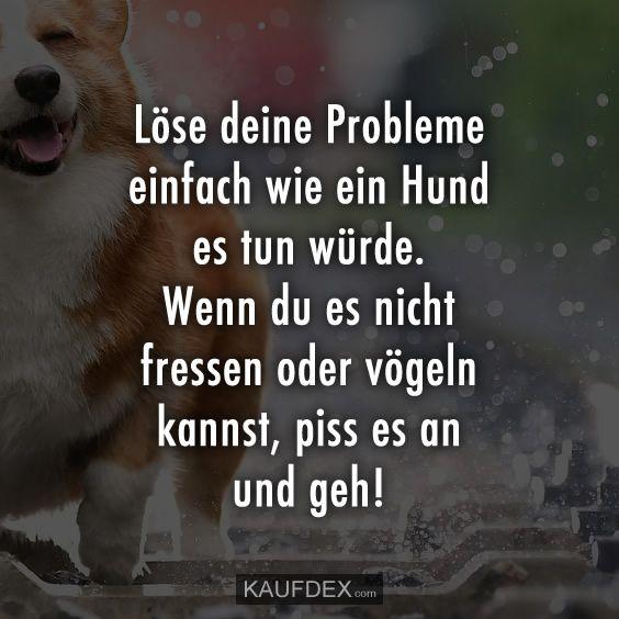 Löse deine Probleme einfach wie ein Hund es tun würde