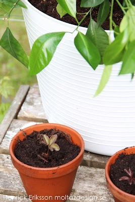Henrick´s tankegångar - inredning, design, trender & trädgård