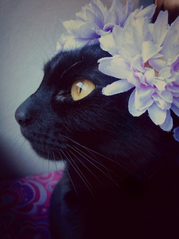 cats wearing floral crowns | Cat With Flower Crown Cute cat with flower crown animal i love ...