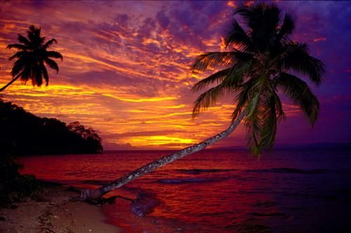 My birth place... Fiji!!!: Buckets Lists, Favorite Places, Dreams Vacations, Fiji Islands, Piña Colada, Google Search, Palms Trees, Fiji Sunsets, Beautiful Sunsets