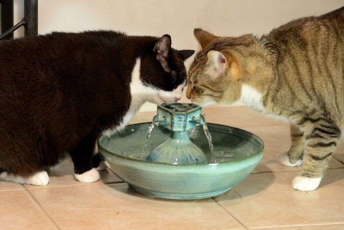 Two Cats Drinking Water From The Same Cat Water Fountain Cat Water Fountain Pet Water Fountain Cat Fountain
