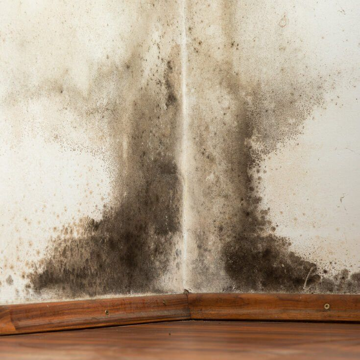 Lovely Black Mold In Basement Walls How to Remove