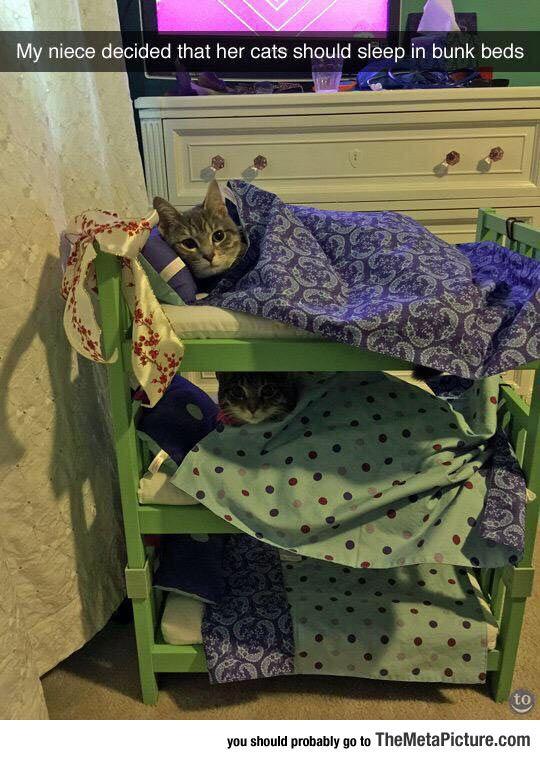 Bunk Bed Pals