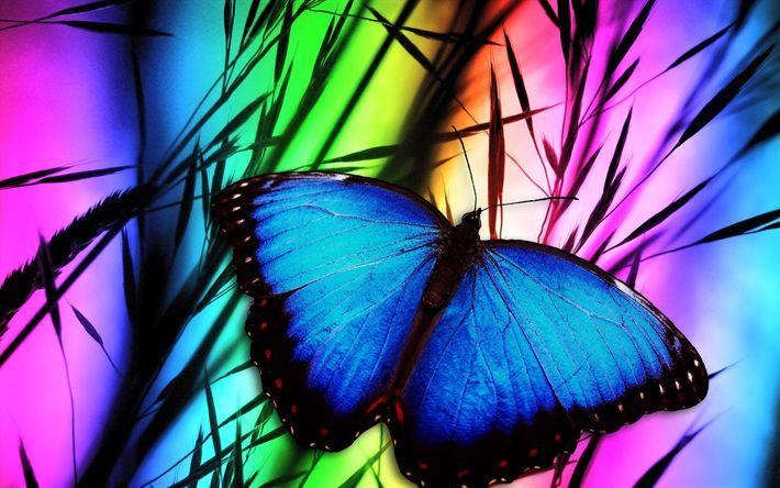 Download wallpapers butterfly, art, grass, close-up, blue butterfly, rainbow