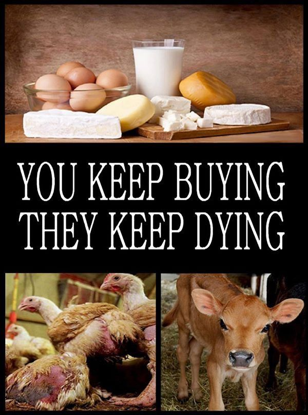 make the connection; dairy & eggs don't just magically appear! a living sentient being is confined, tortured, abused & murdered for you to consume that crap...poison to your body...