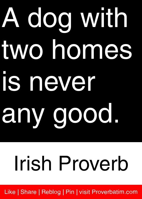 A dog with two homes is never any good. - Irish Proverb #proverbs #quotes