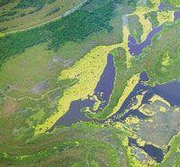 Río Grande de la Magdalena - Colección Ecológica del Banco