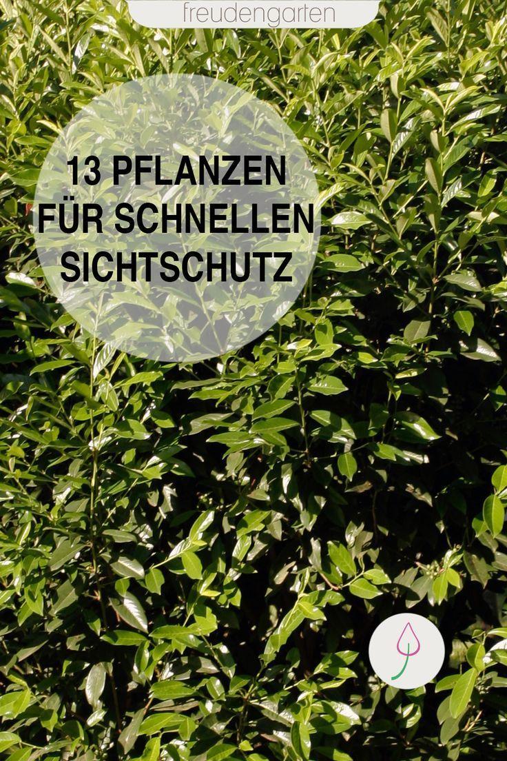 Schnell Wachsende Pflanzen Als Sichtschutz Wachsenden Pflanzen Schnell Wachsende Pflanzen Straucher Garten