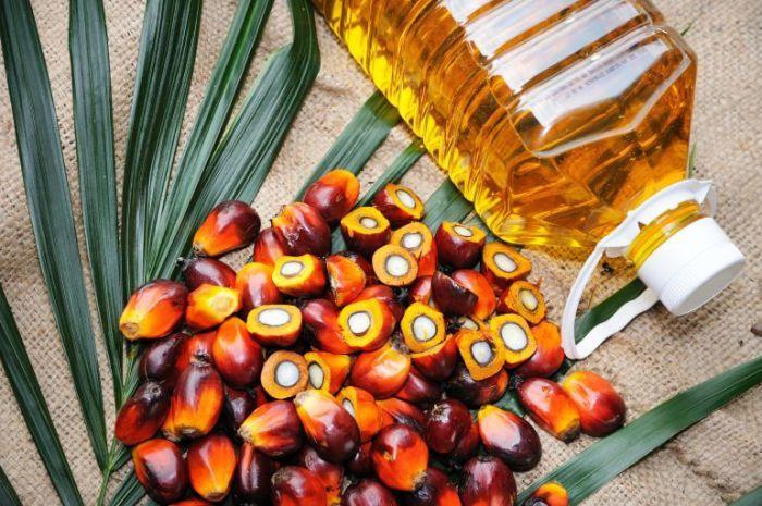 El aceite de palma, en la mirilla pública