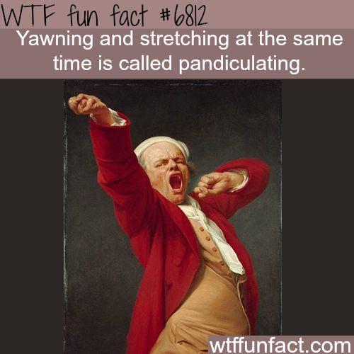 Yawning and stretching - WTF fun fact