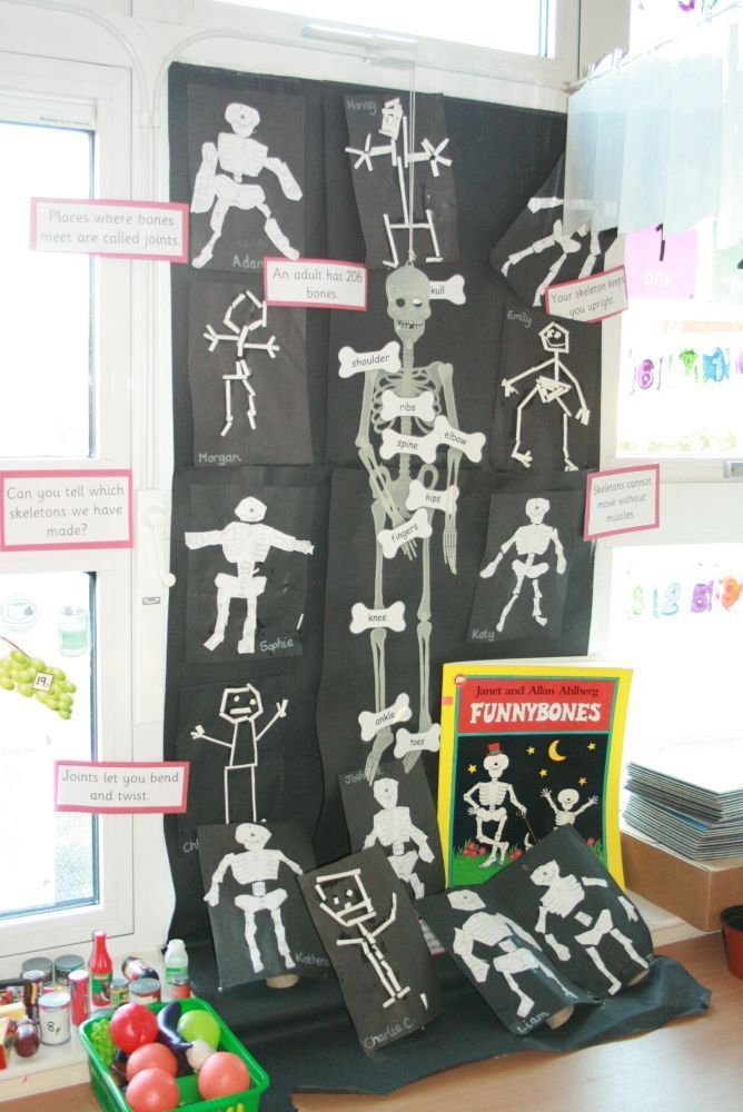Great science project on the human body - Cleadon Village CE Primary School