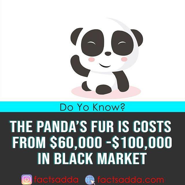 factsadda #facts #fact #dailyfact #panda #fur #black #market