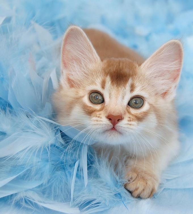 Pin on Fuzzy Baby Meow Meows