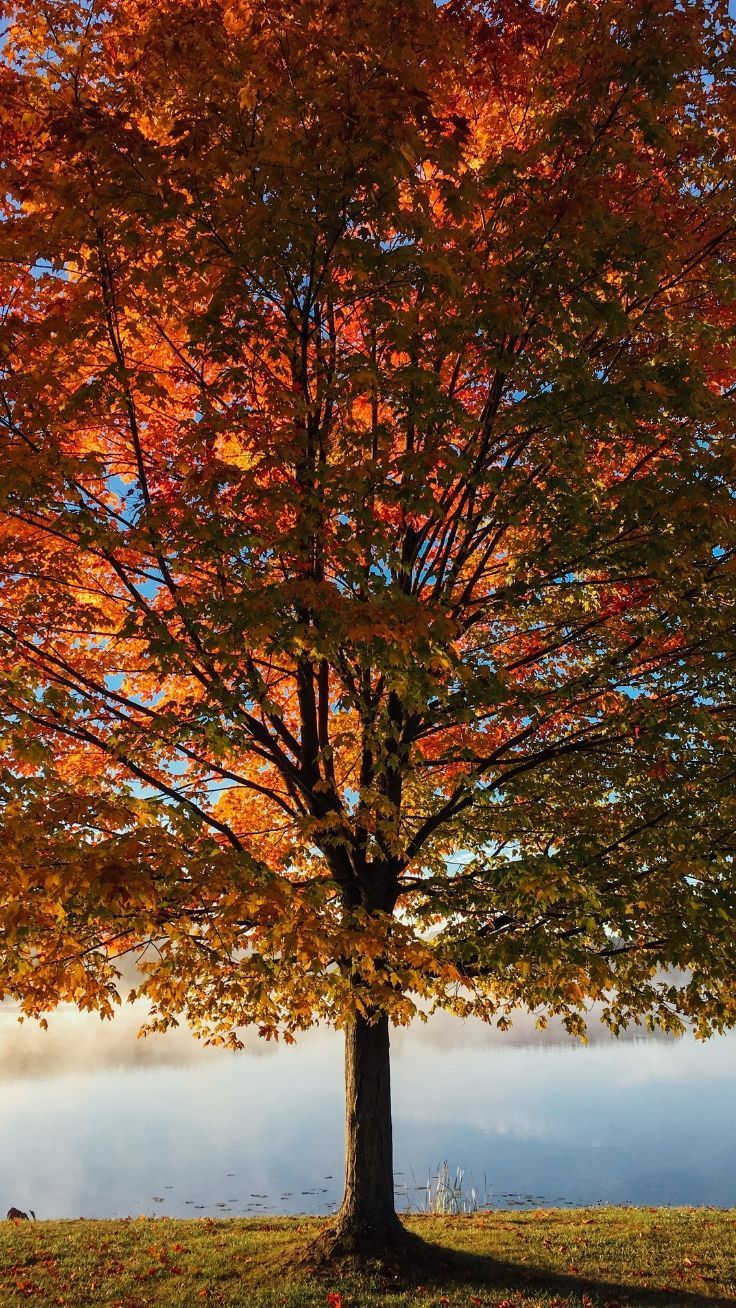 14 Iphone Wallpapers To Fall In Love With Autumn Iphone
