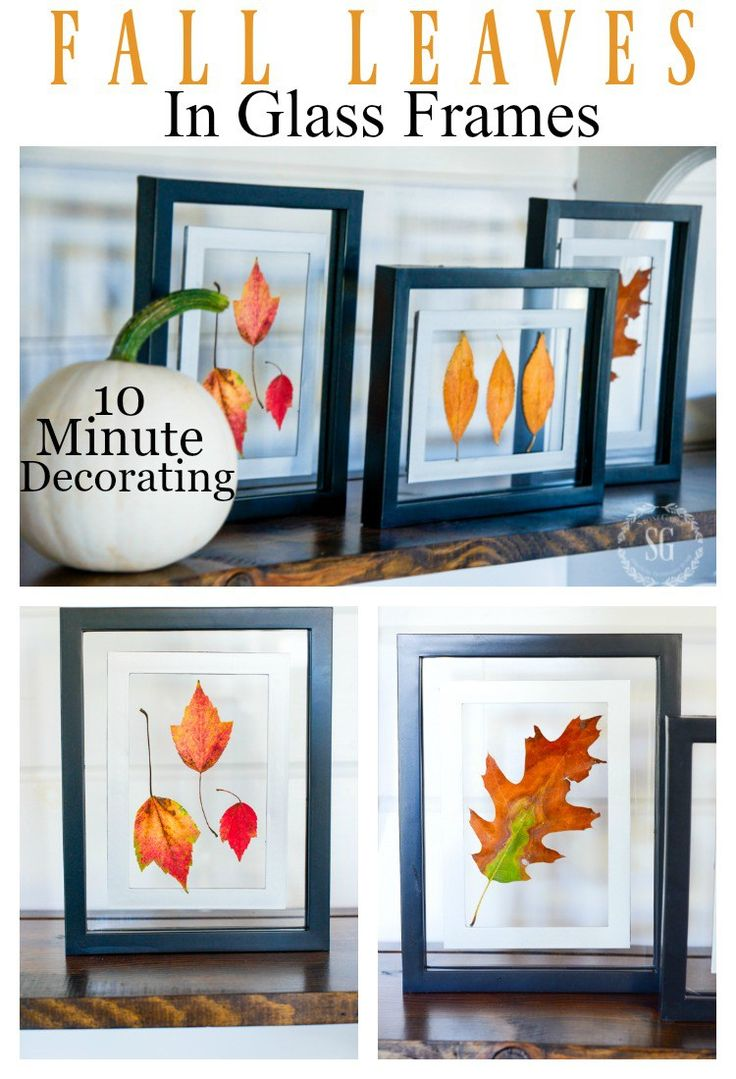 10 MINUTE FALL DECORATING- Create these beautiful floating leaves in glass frames in under 10 minutes!